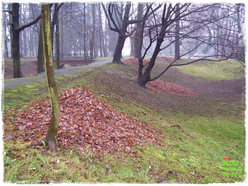 Park Miejski w Nysie zogrodemnaty74