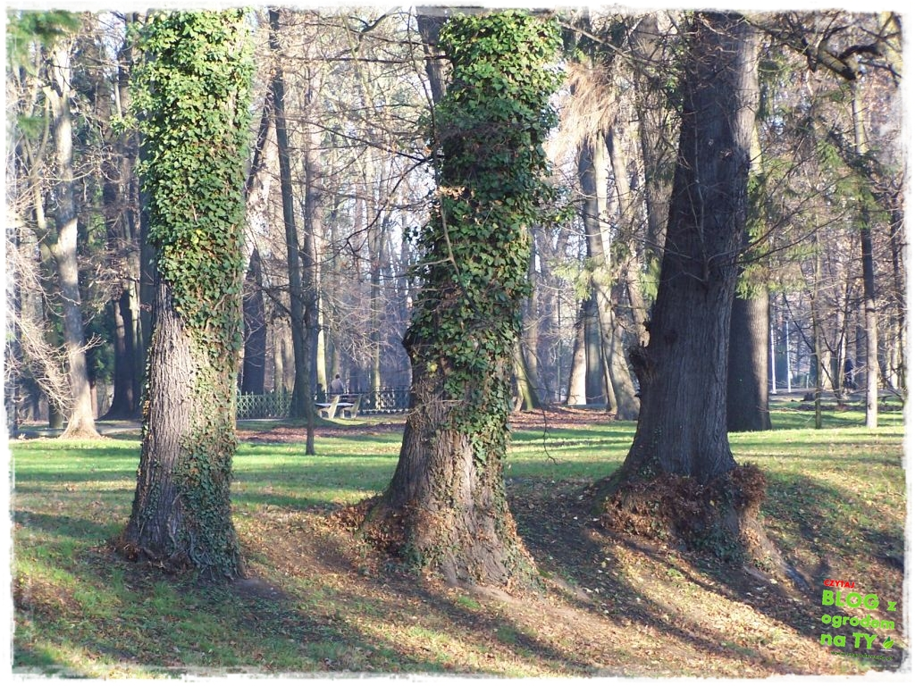 Park Miejski w Nysie zogrodemnaty79