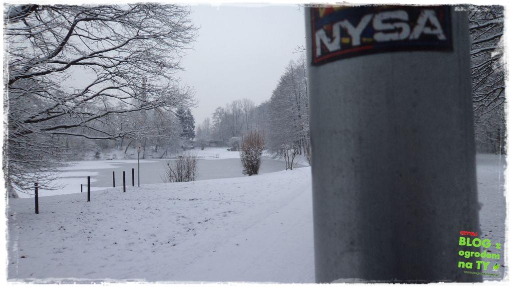 Park Miejski w Nysie zogrodemnaty8