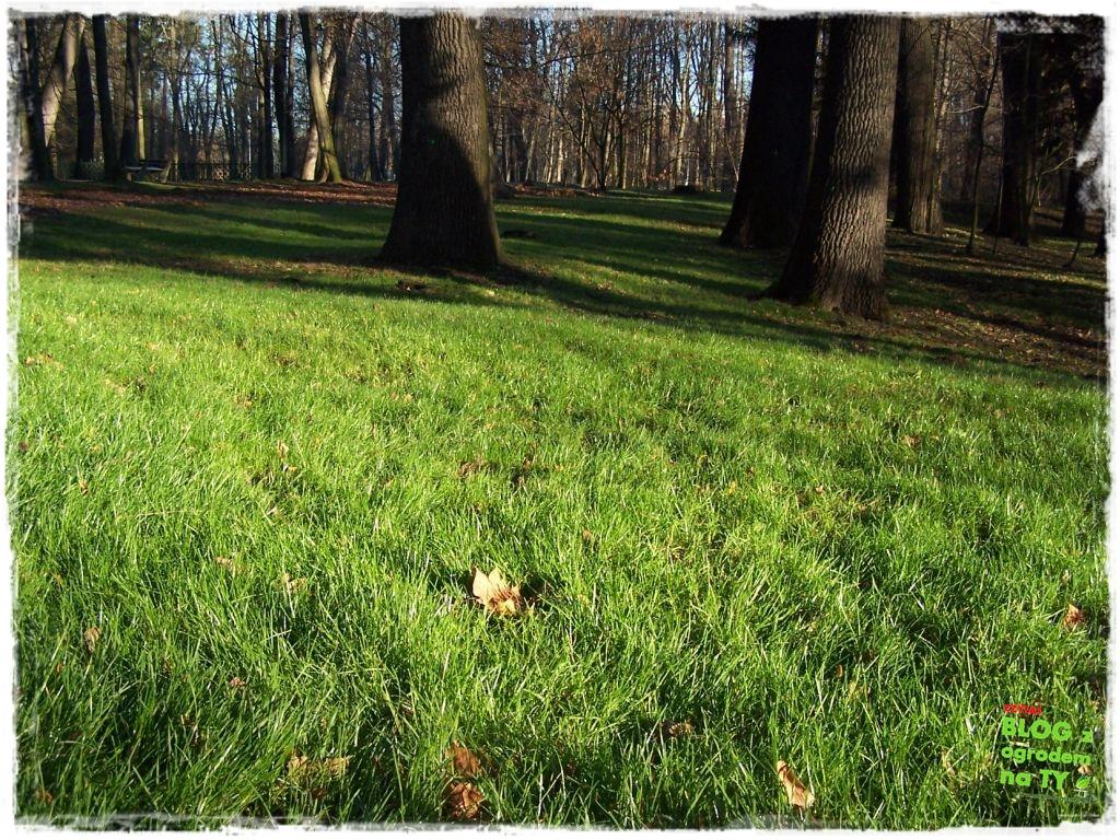 Park Miejski w Nysie zogrodemnaty81