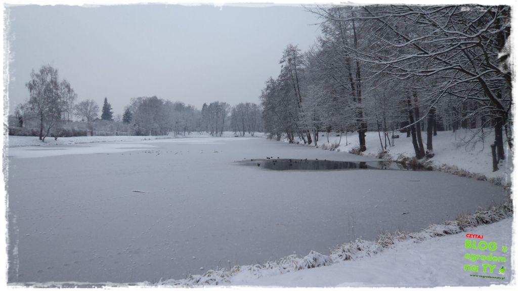 Park Miejski w Nysie zogrodemnaty9