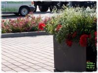 Firma ogrodnicza zogrodemnaty