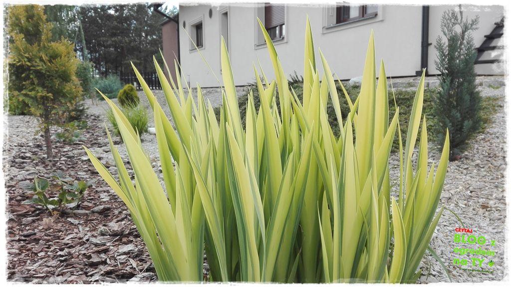 mój ogród zogrodemnaty12