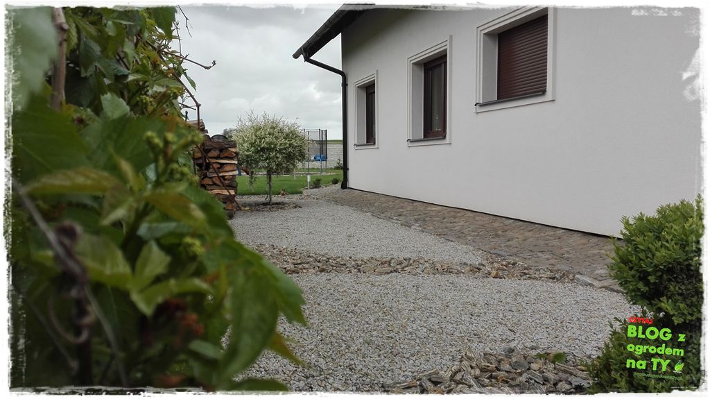 mój ogród zogrodemnaty19