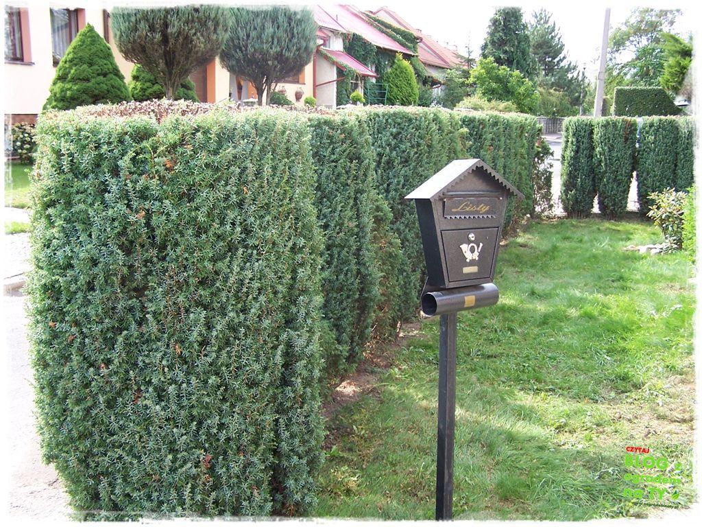 pomysły ogrodowe zogrodemnaty5