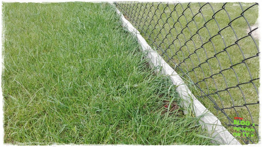 jak kosić trawnik zogrodemnaty7