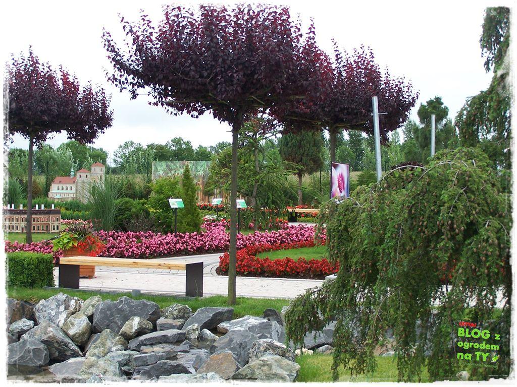 minieuroland festiwal kwiatów zogrodemnaty15
