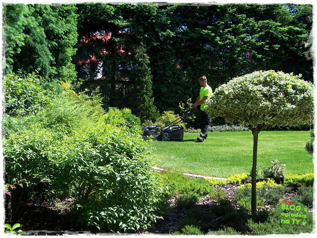jak kosić trawnik zogrodemnaty2