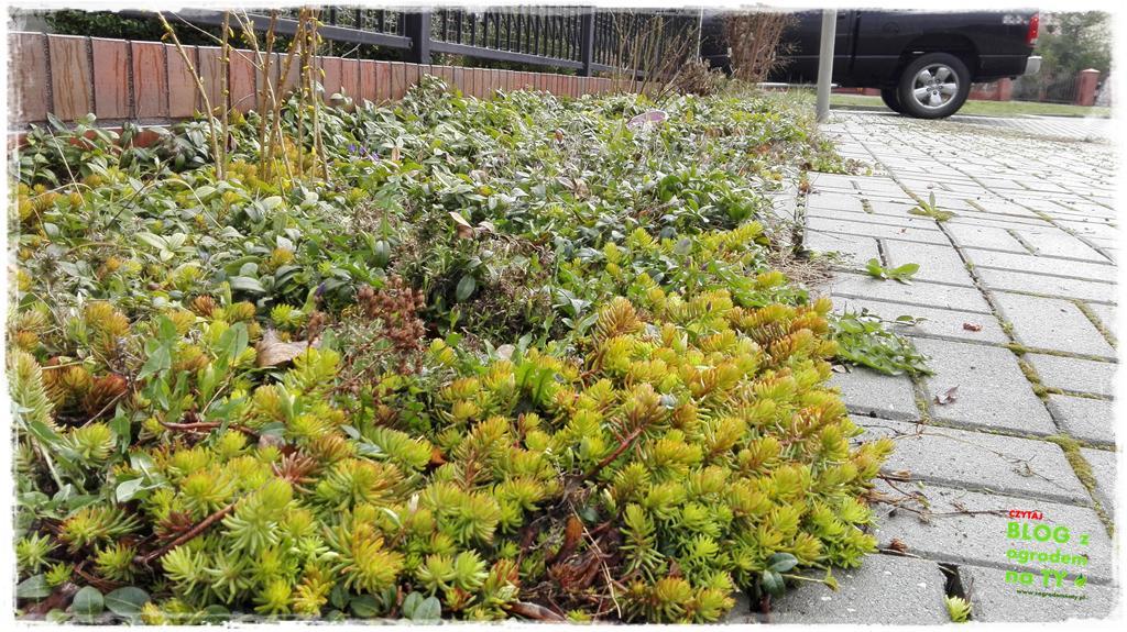 pomysły ogrodowe zogrodemnaty16