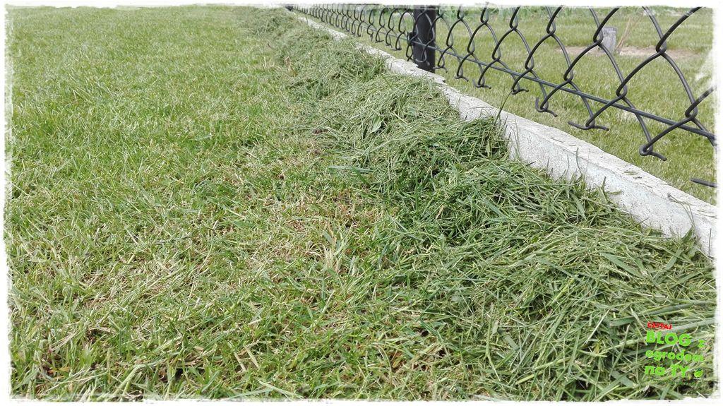 jak kosić trawnik zogrodemnaty10