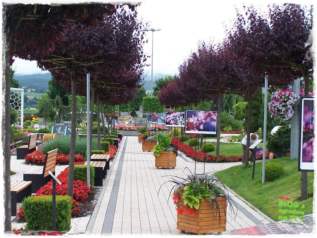 minieuroland festiwal kwiatów zogrodemnaty16