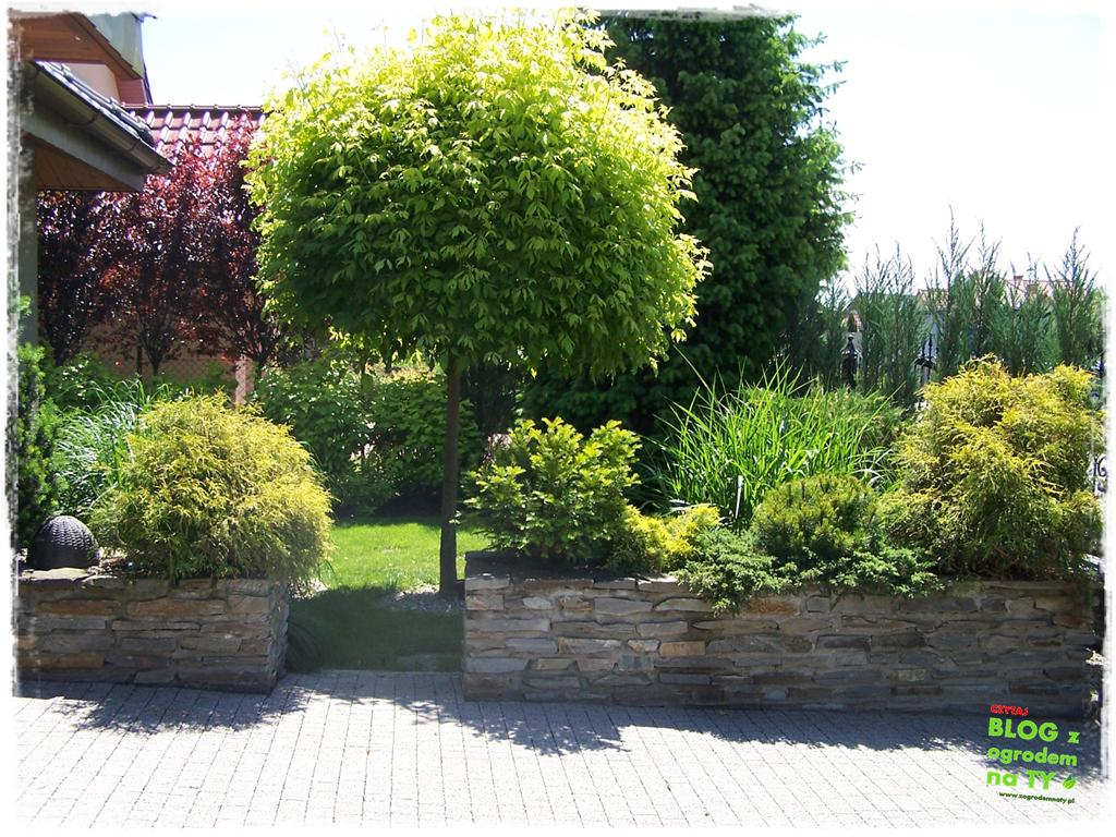 pomysły ogrodowe zogrodemnaty14