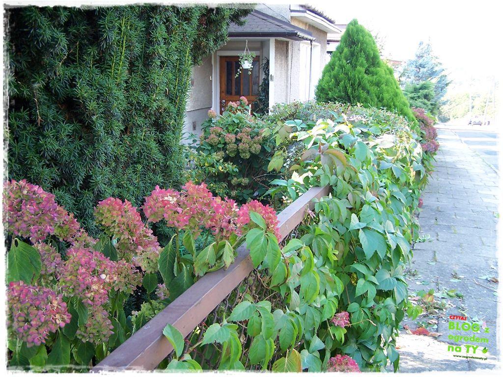 pomysły ogrodowe zogrodemnaty1