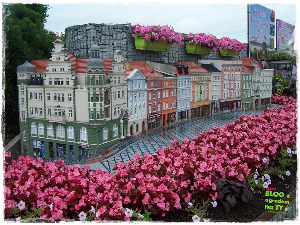 minieuroland festiwal kwiatów zogrodemnaty43