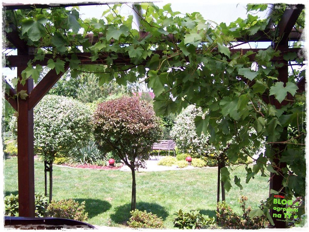 taras w ogrodzie zogrodemnaty17
