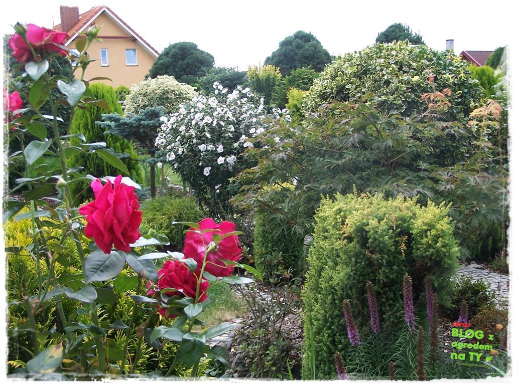 Ogród z dużą ilością gatunków zogrodemnaty20