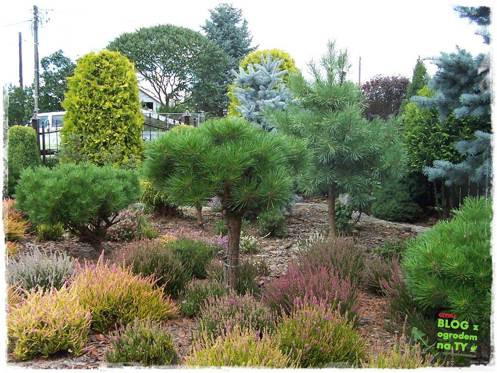 Ogród z dużą ilością gatunków zogrodemnaty4