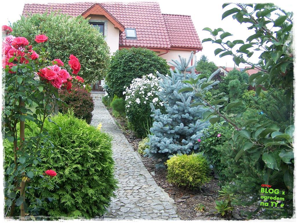 Ogród z dużą ilością gatunków zogrodemnaty5