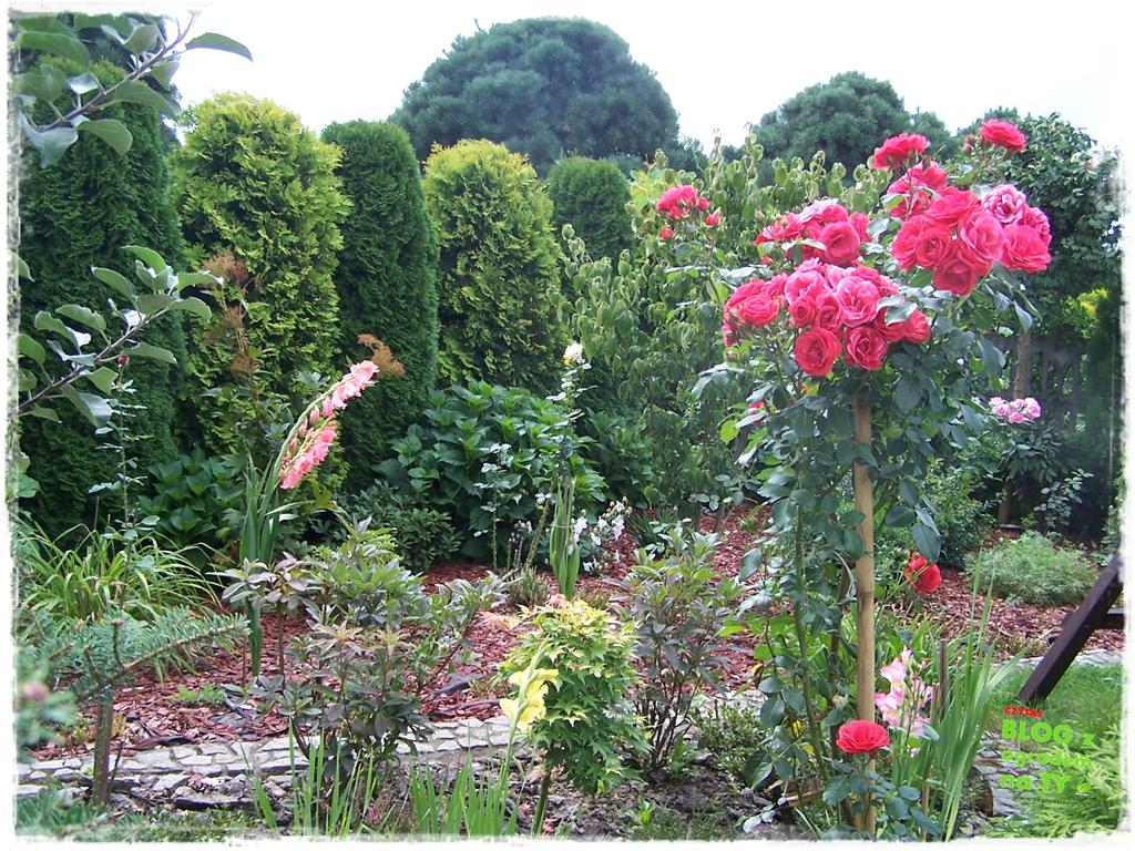Ogród z dużą ilością gatunków zogrodemnaty29