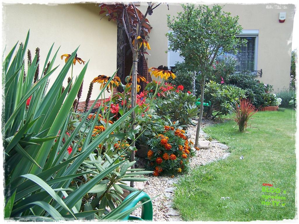 Ogród z dużą ilością gatunków zogrodemnaty34