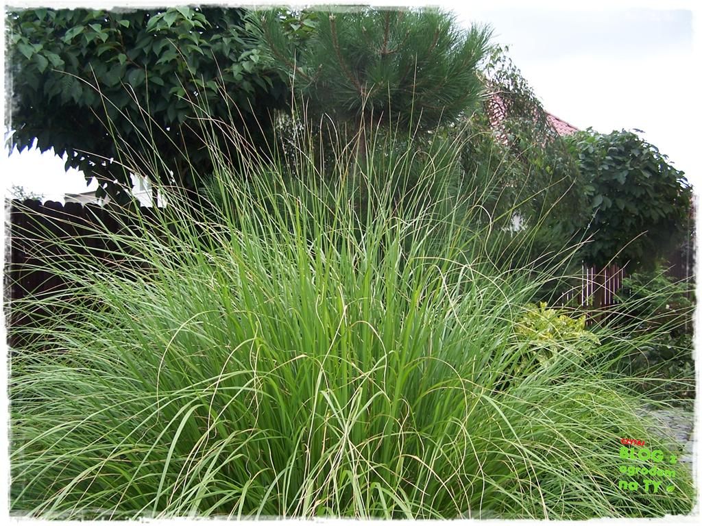 Ogród z dużą ilością gatunków zogrodemnaty10