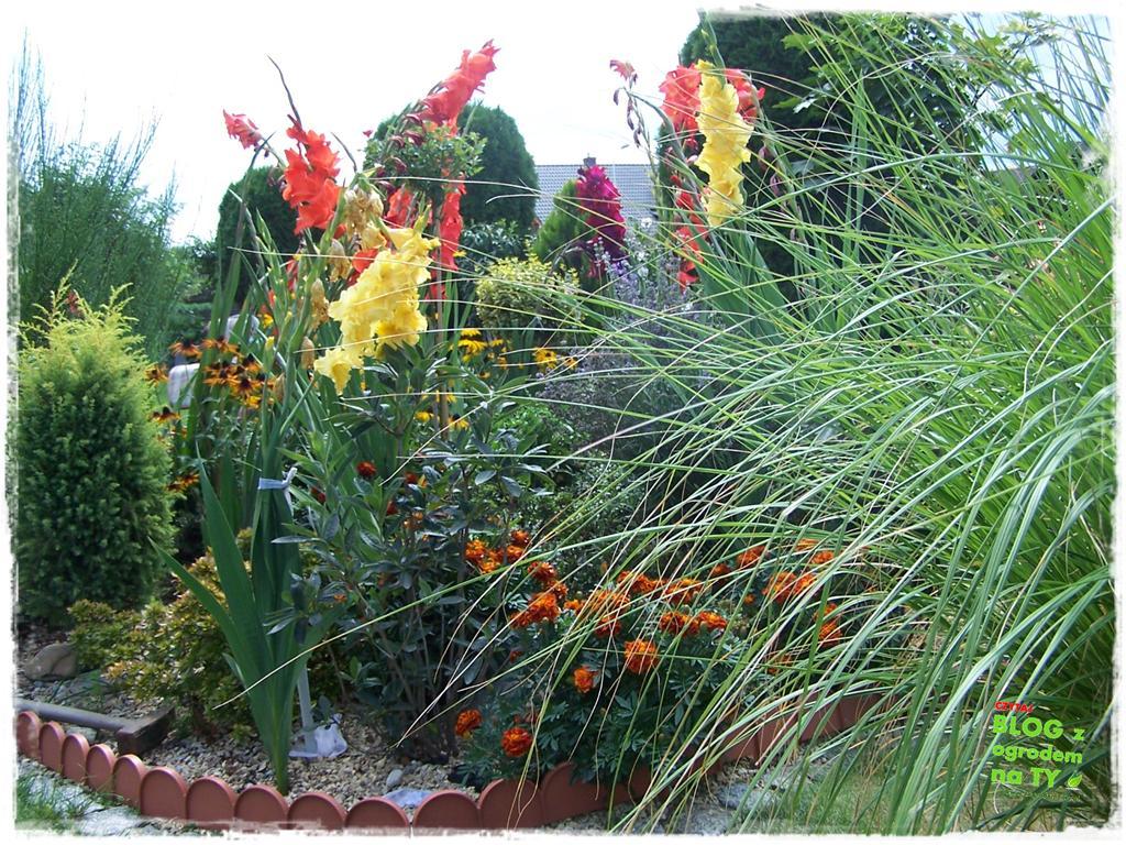 Ogród z dużą ilością gatunków zogrodemnaty27