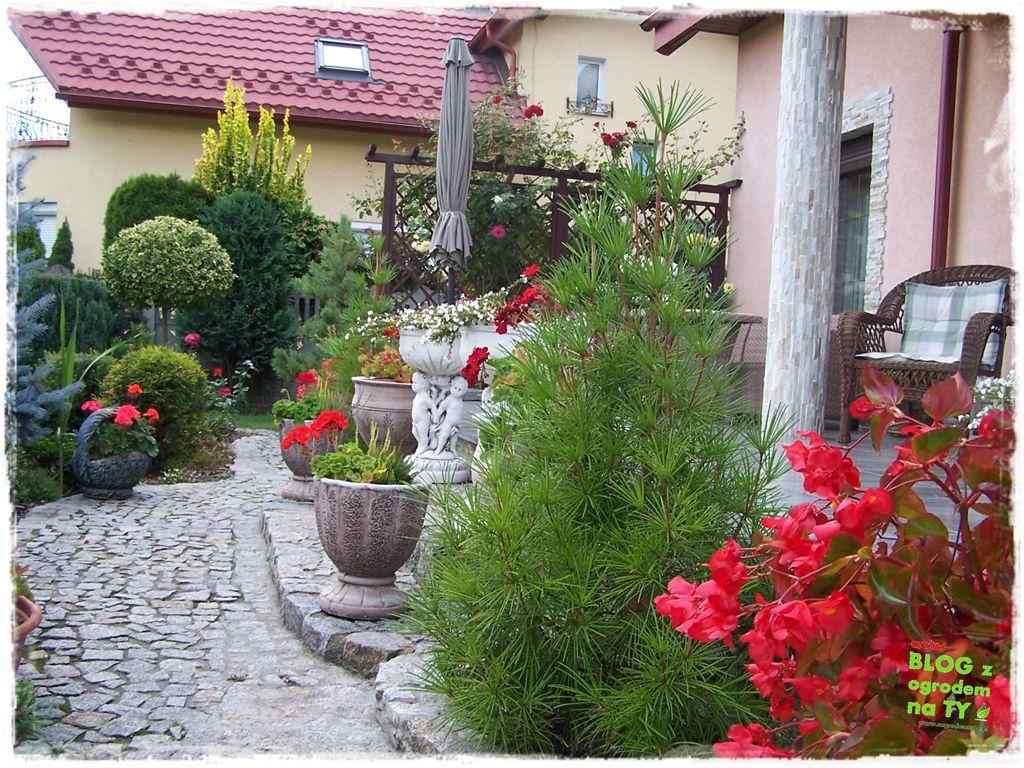 Ogród z dużą ilością gatunków zogrodemnaty2