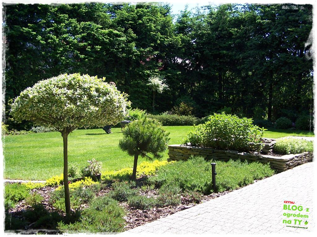 ogród po polsku zogrodemnaty2