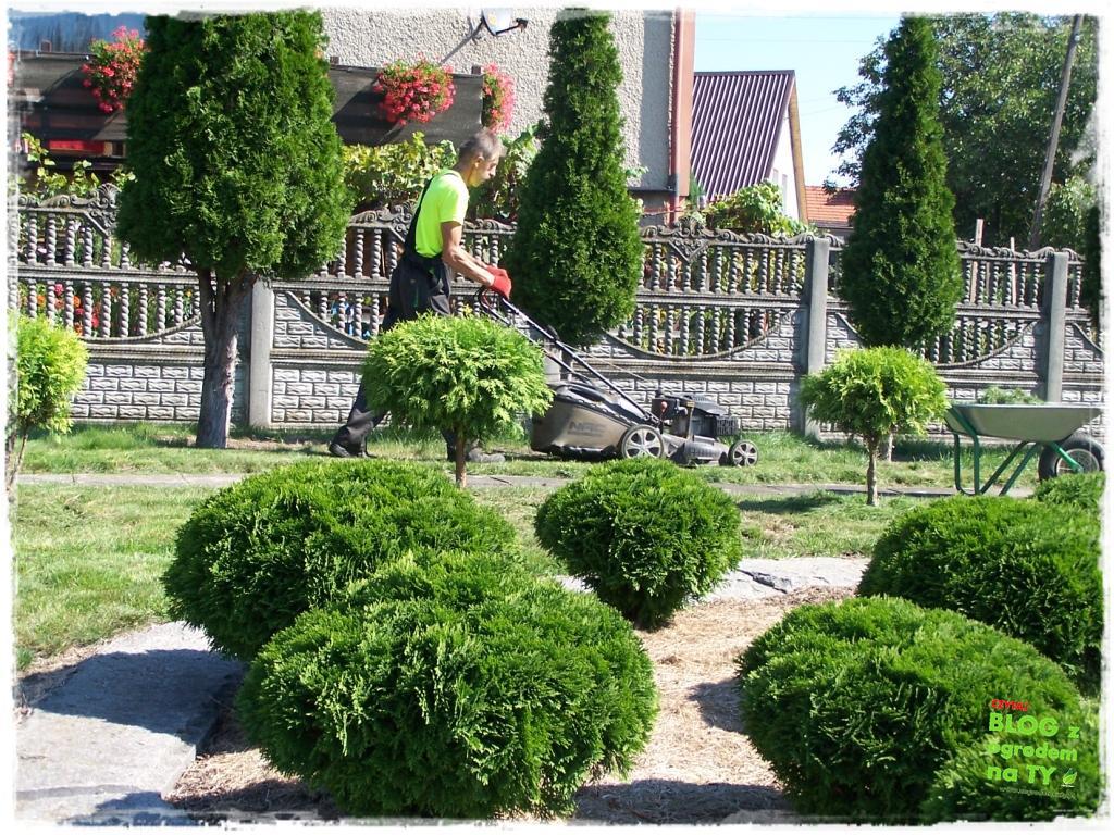 jesienna pielęgnacja trawnika zogrodemnaty2