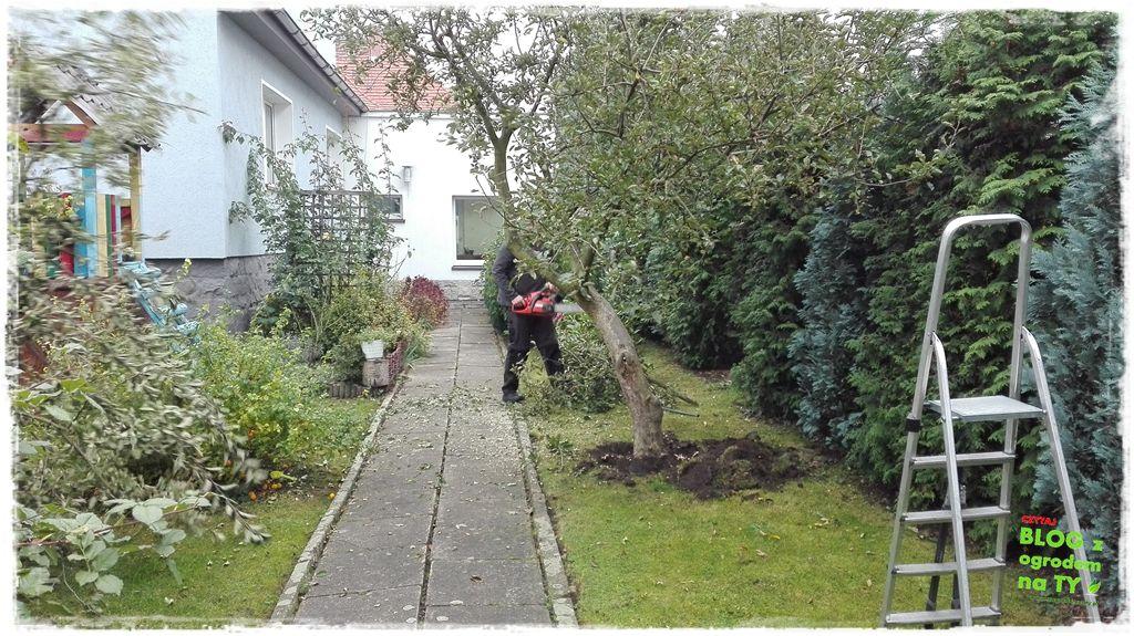 jak wyciąć drzewo zogrodemnaty3