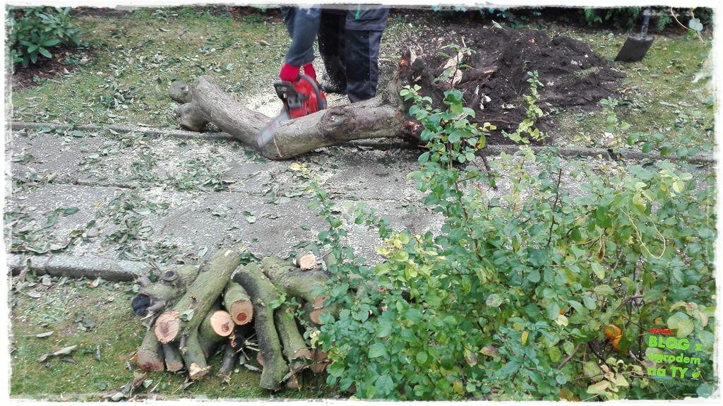 jak wyciąć drzewo zogrodemnaty21