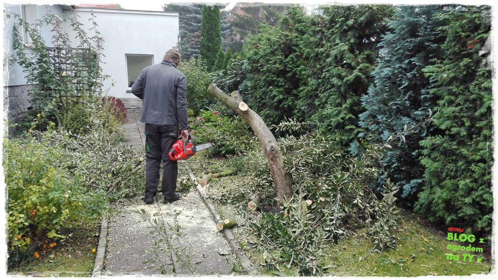 jak wyciąć drzewo zogrodemnaty9