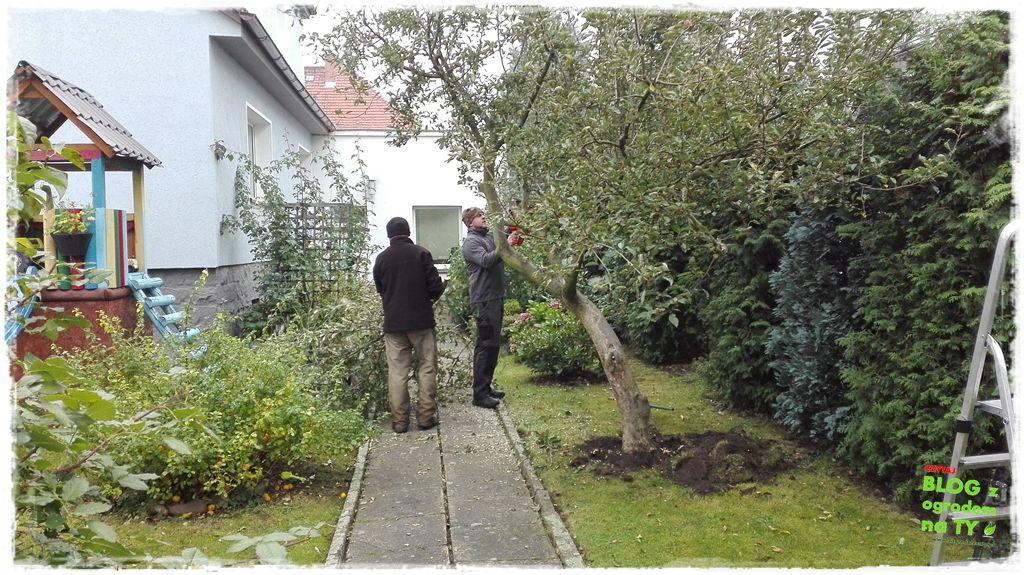 jak wyciąć drzewo zogrodemnaty2