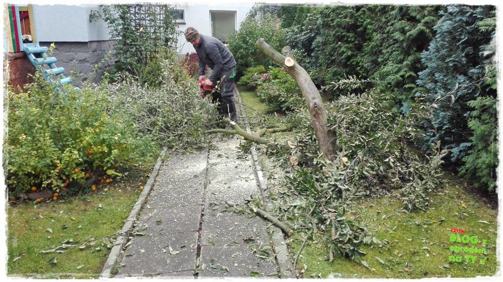 jak wyciąć drzewo zogrodemnaty7