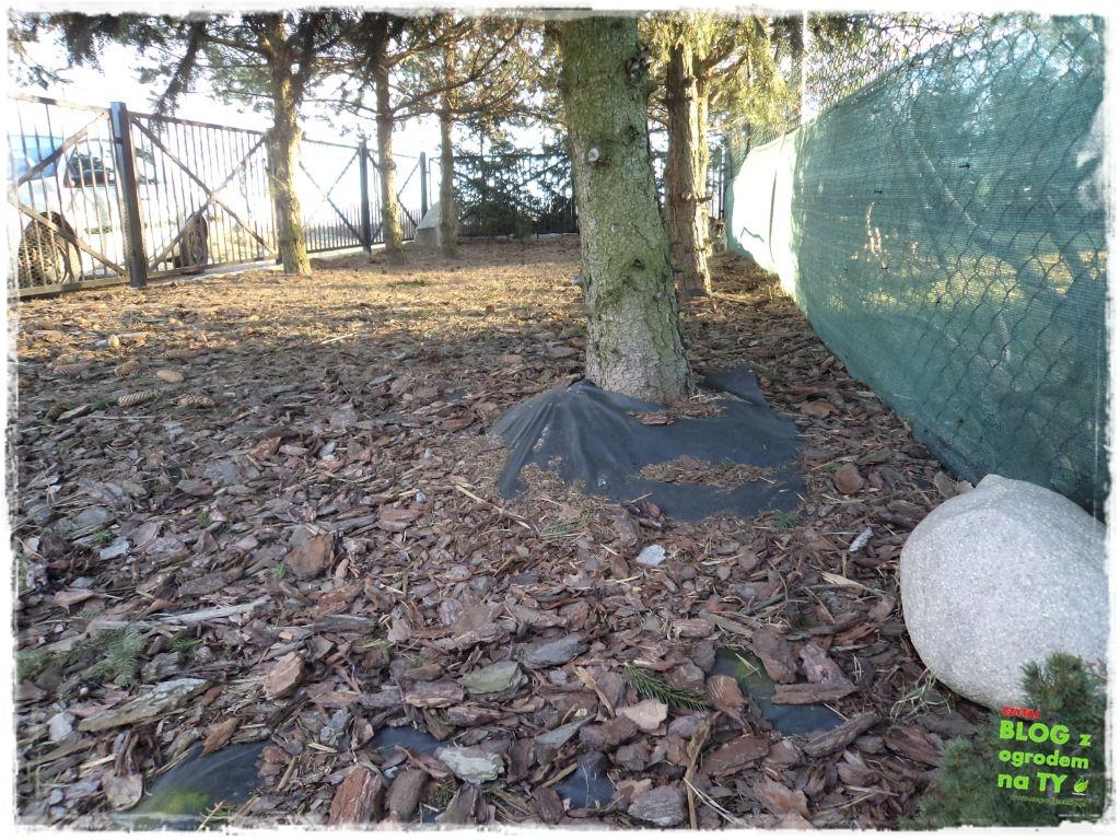 Jak przygotować ogród do zimy zogrodemnaty11