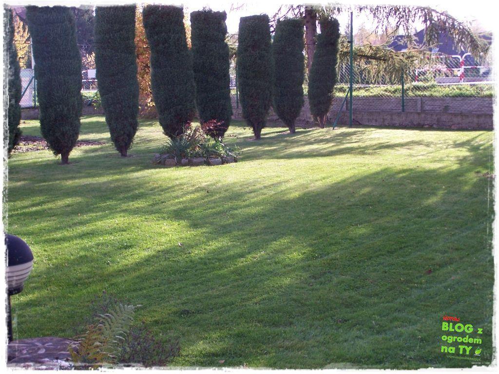 Jak przygotować ogród do zimy zogrodemnaty6