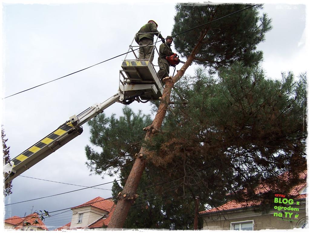 jak zmusić sąsiada do wycinki drzewa zogrodemnaty4