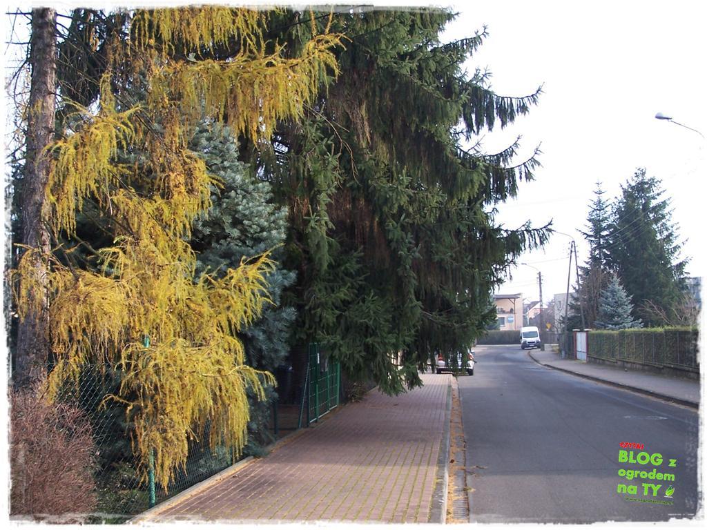 jak zmusić sąsiada do wycinki drzewa zogrodemnaty6