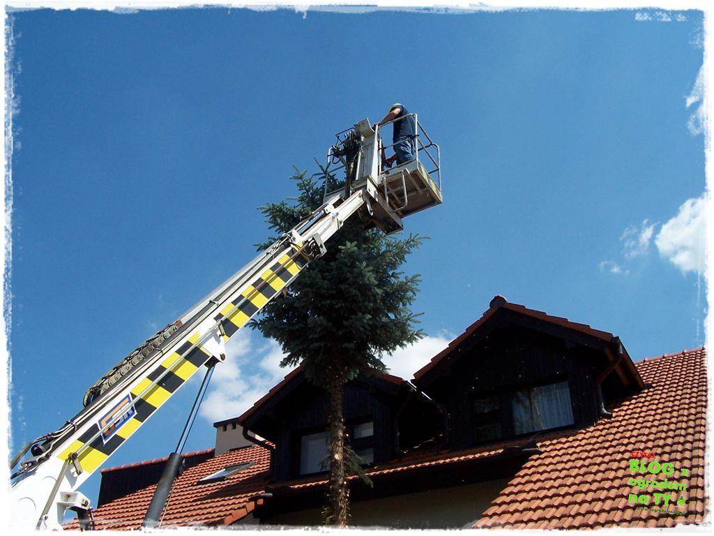 jak zmusić sąsiada do wycinki drzewa zogrodemnaty2