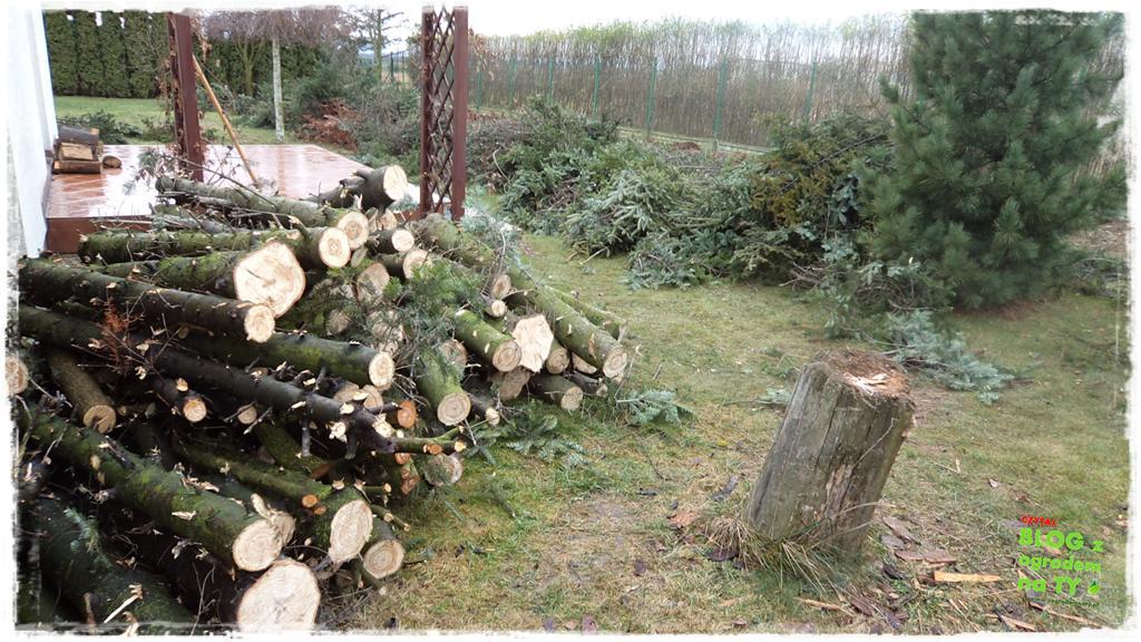 jak zmusić sąsiada do wycinki drzewa zogrodemnaty9