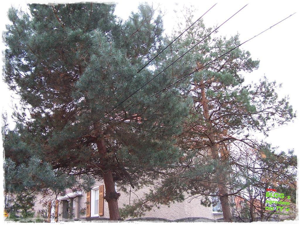 jak zmusić sąsiada do wycinki drzewa zogrodemnaty3