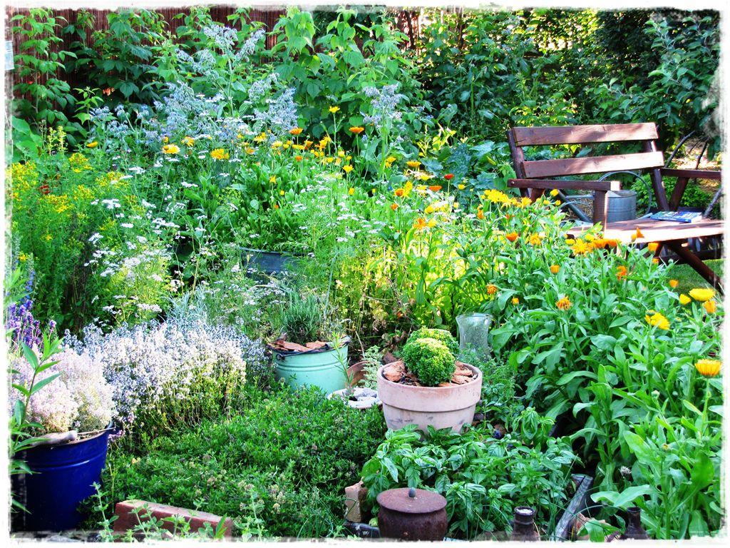 zioła w ogrodzie zogrodemnaty13