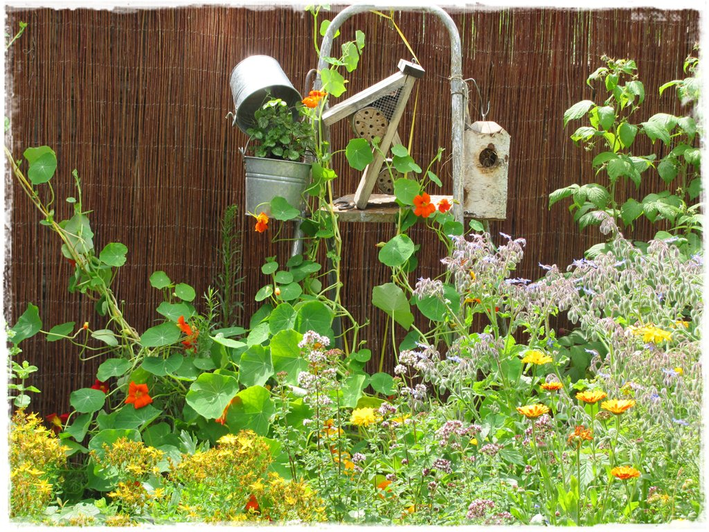 zioła w ogrodzie zogrodemnaty21