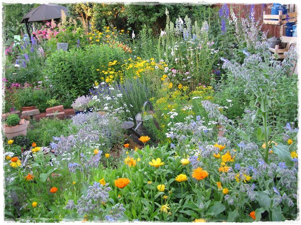 zioła w ogrodzie zogrodemnaty19
