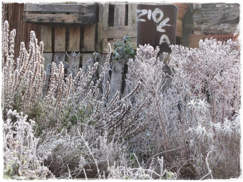 zioła w ogrodzie zogrodemnaty11
