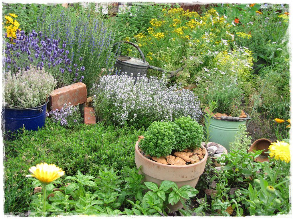 zioła w ogrodzie zogrodemnaty22