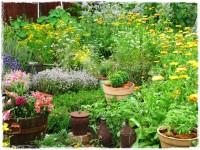 zioła w ogrodzie zogrodemnaty1