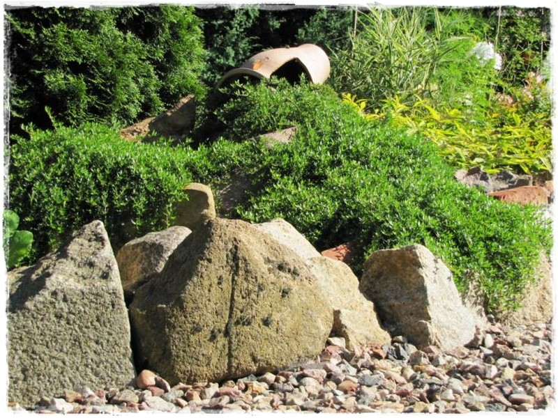 zioła w ogrodzie zogrodemnaty4