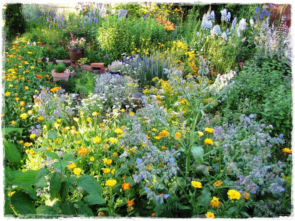 zioła w ogrodzie zogrodemnaty2
