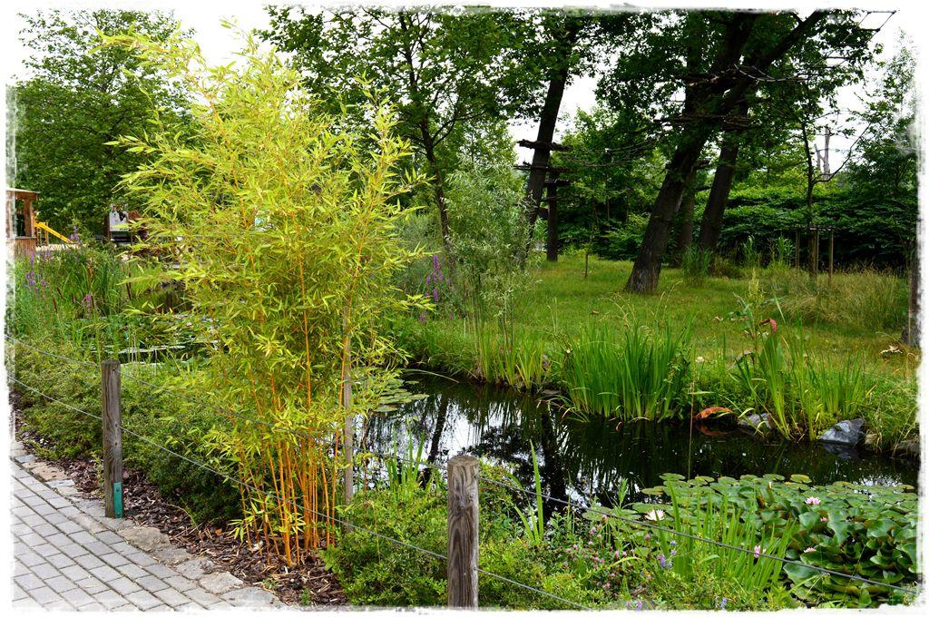 bambus-ogrodowy-zoo-opole-fylostachys
